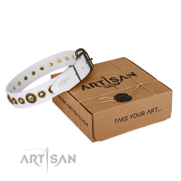 Fine quality leather dog collar for walking in style