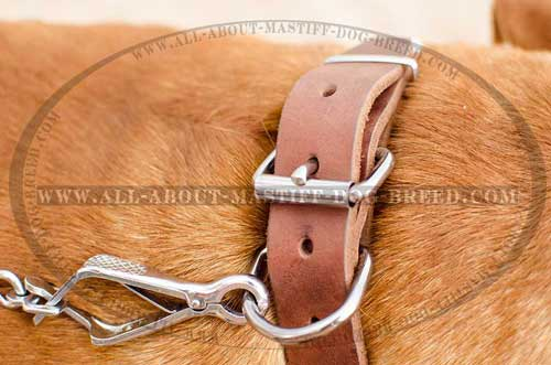 Reliable Dogue de Bordeaux leather collar