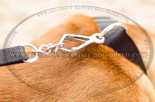 Dogue-de-Bordeaux nylon collar with stainless D-ring