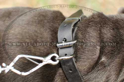 Strong leather dog collar with stainless buckle and D-ring