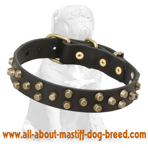 Leather dog collar with stainless fittings