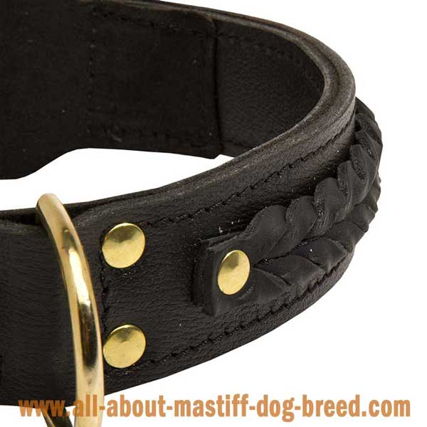 Safe Leather Collar for French Mastiff