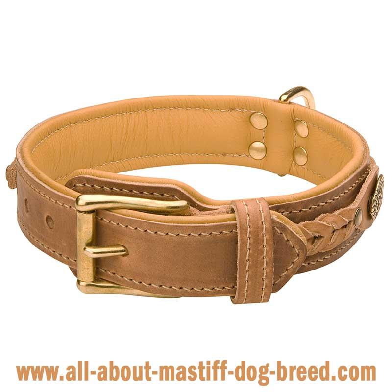 French Mastiff Leather Dog Collar Elegant Handmade Collar