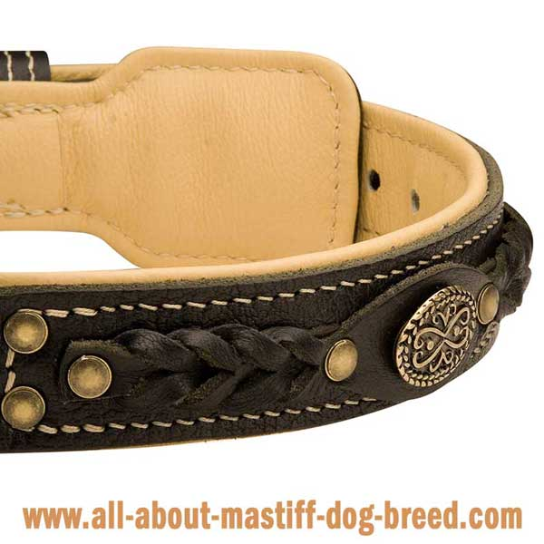 French Mastiff Dog Collar Hand Stitched with White Strong Thread