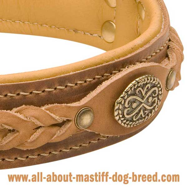 German Mastiff Dog Collar Hand Stitched with Riveted Braided Decoration
