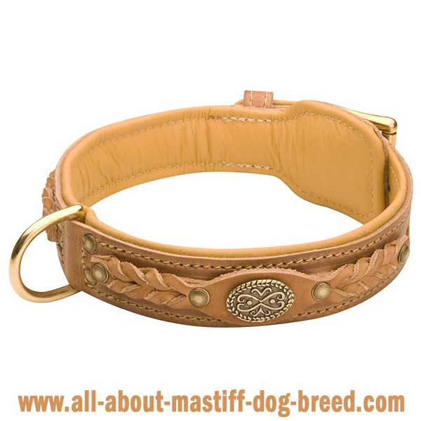 German Mastiff Dog Collar Made of Genuine Leather with  Riveted Brass Fittings