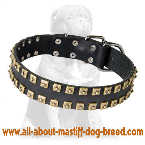 Trendy leather dog collar with nickel plates