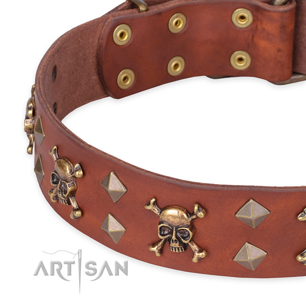 Casual style leather Mastiff collar with fancy studs