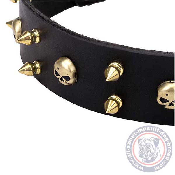 Black leather dog collar with brass spikes