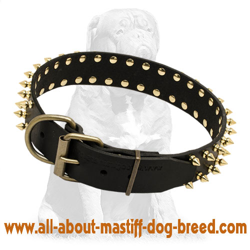 Practical black leather dog collar with brass fittings