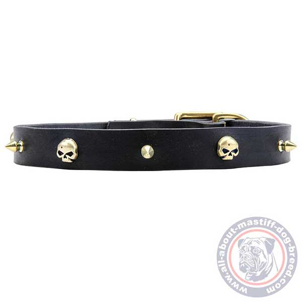 Trendy adorned leather dog collar