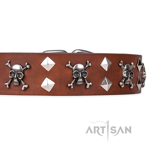 Day-to-day leather dog collar with exciting embellishments