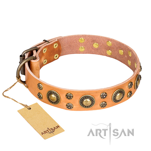 Versatile leather collar for your stunning canine