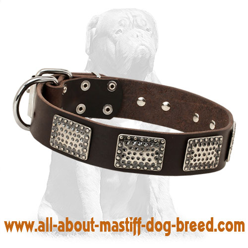 Reliable leather dog collar with riveted buckle and D-ring