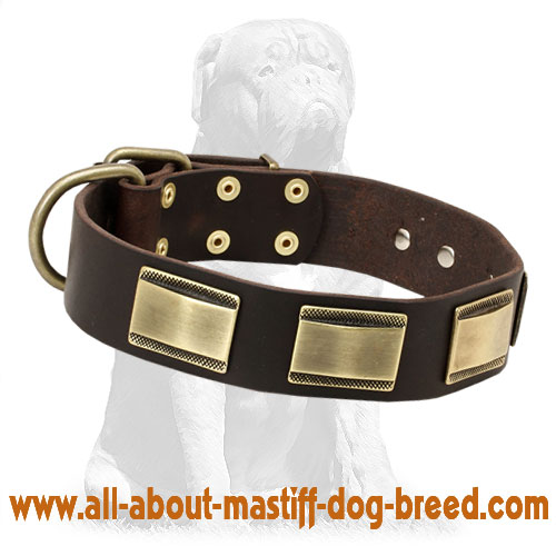 Strong leather dog collar with sturdy buckle and D-ring
