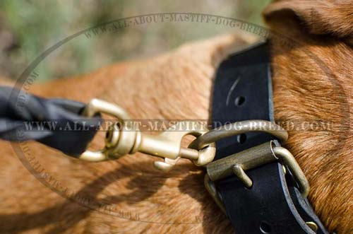Long-lasting leather dog collar with stainless buckle and D-ring
