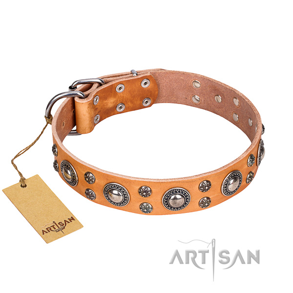 Heavy-duty leather dog collar with chrome plated fittings