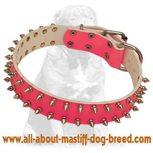Spiked pink leather dog collar