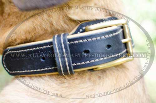 Durable leather dog collar equipped with brass hardware