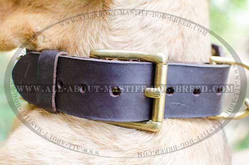Reliable leather dog collar with stainless buckle