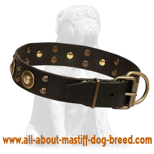 Leather dog collar with rust-resistant fittings