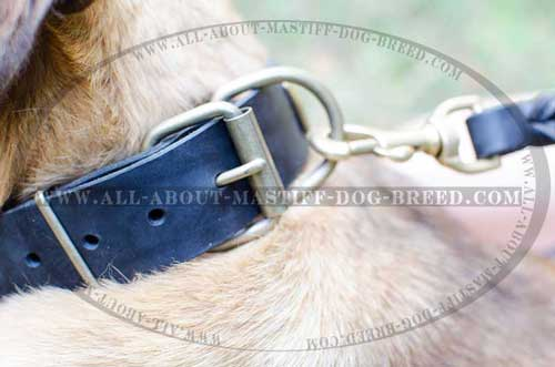 Strong leather dog collar equipped with sturdy fittings