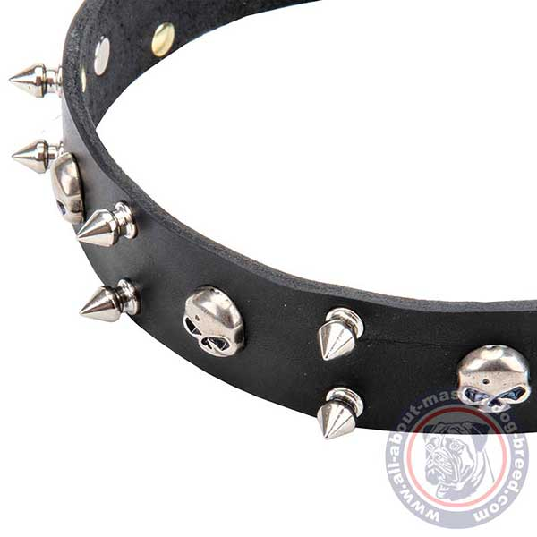 Leather dog collar with nickel plated adornments