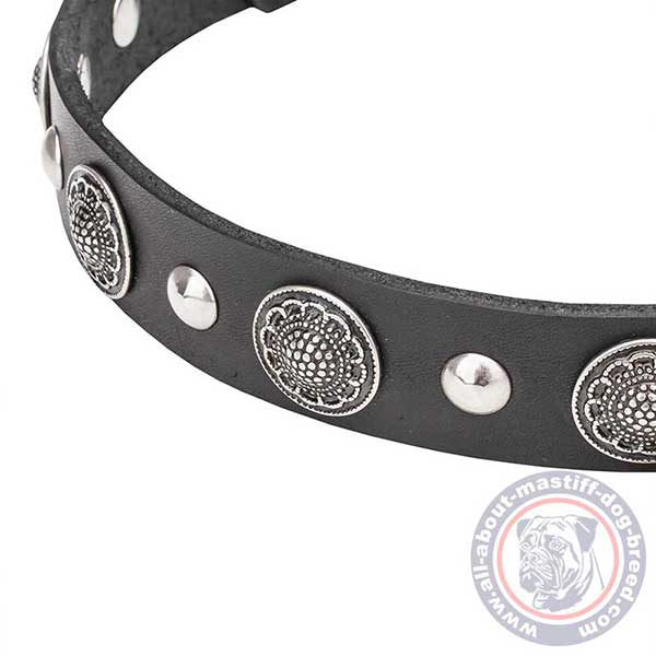 Daily leather dog collar with studs