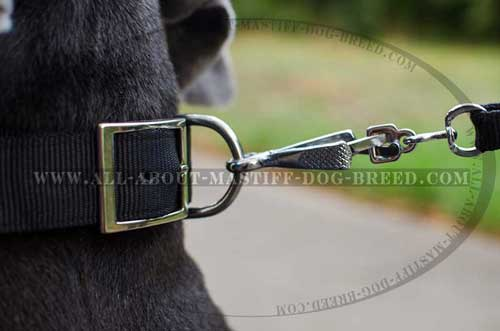 Super strong leather dog collar