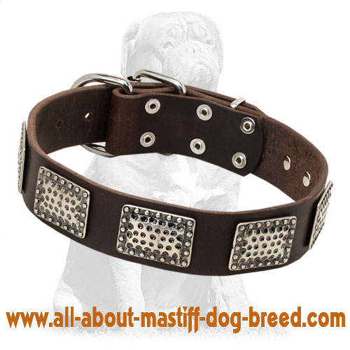 Fashionable leather dog collar with nickel plates
