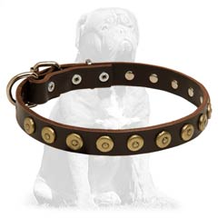 Mastiff Studded Leather Dog Collar with Brass Buckle and D-ring