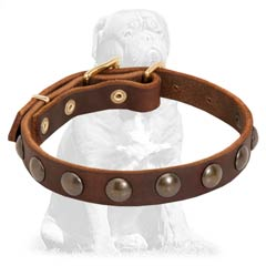 Mastiff Studded Leather Dog Collar with Brass Hardware