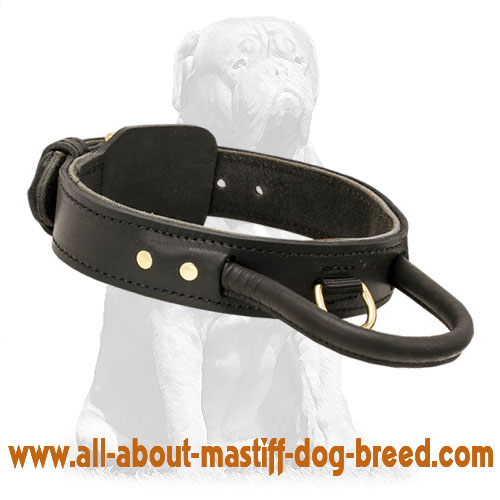 French Mastiff collar for reliable pet control