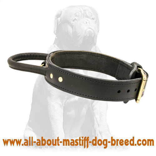 Agitation training French Mastiff collar made of thick leather