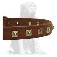 Safe Mastiff collar decorated with goldish studs