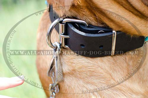 Easy in use leather collar