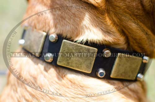 Leather dog collar with plates and pyramids