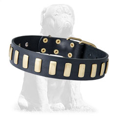 Buckled leather Mastiff collar