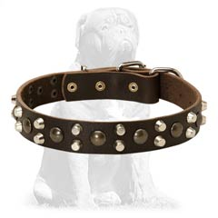 Mastiff leather collar with non-rusting adornments
