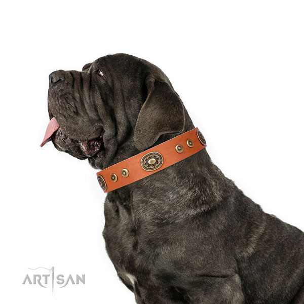 Mastiff unusual full grain leather dog collar for handy use title=Mastiff leather collar with embellishments for daily walking