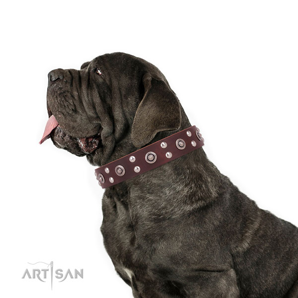 Mastiff top notch genuine leather dog collar for everyday walking title=Mastiff full grain genuine leather collar with studs for stylish walking