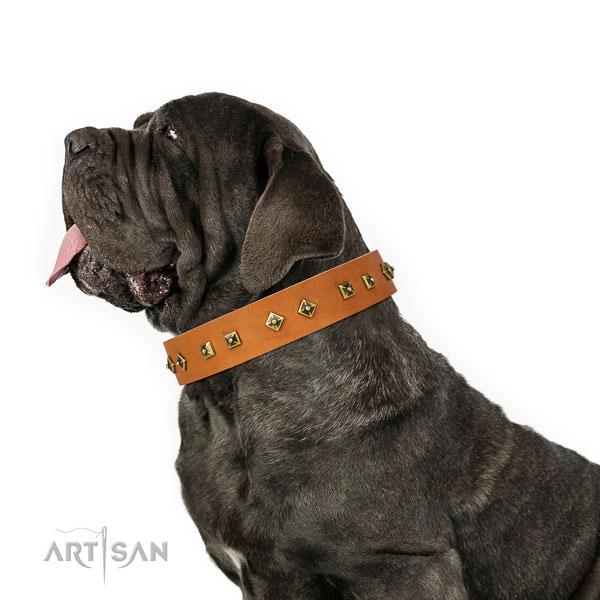 Mastiff embellished leather dog collar for basic training title=Mastiff genuine leather collar with embellishments for fancy walking