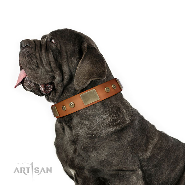 Mastiff awesome natural genuine leather dog collar for walking title=Mastiff leather collar with adornments for easy wearing