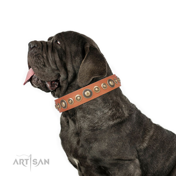 Mastiff significant full grain natural leather dog collar for fancy walking title=Mastiff leather collar with adornments for handy use