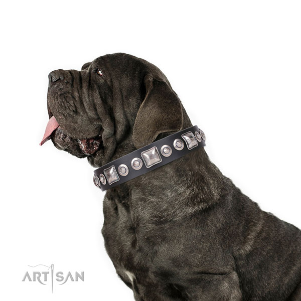 Mastiff incredible natural genuine leather dog collar for handy use title=Mastiff full grain natural leather collar with adornments for daily use