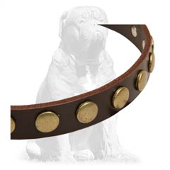 Durable  leather collar with riveted fittings