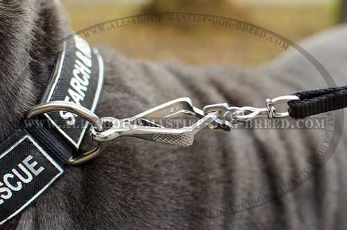 Nylon Mastiff collar with nickel plated D-ring and buckle