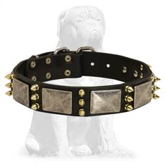 Leather collar with shiny spikes