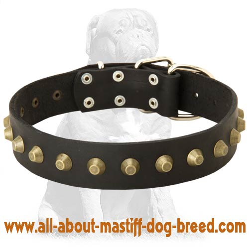 Leather dog collar with brass cones