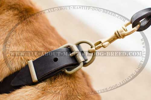 Mastiff leather collar with strong D-ring